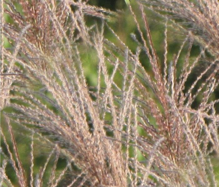 grasses_seamless_tiling