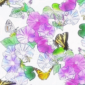 Morning Glories & Butterflies on White