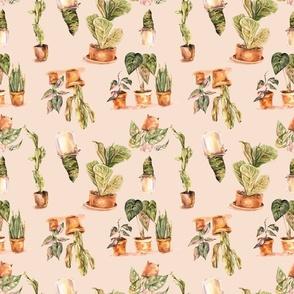 House plant, botanical pattern