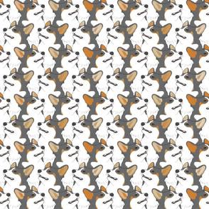 Tricolor Pembroke Welsh Corgi portrait pack