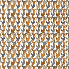 Small Rat terrier portrait pack