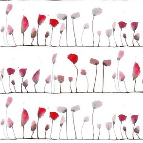 poppies stripe
