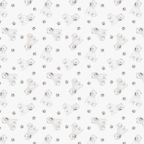 Tiny West Highland White Terrier - gray