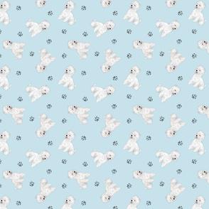 Tiny West Highland White Terrier - blue