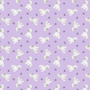 Tiny West Highland White Terrier - purple