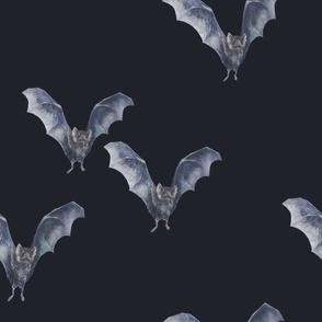 Vampire Bats - Midnight Blue/Black