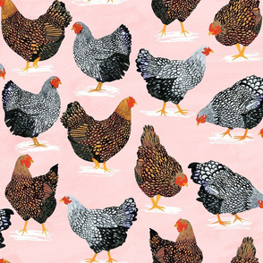 Plucky Chickens Pink - 36