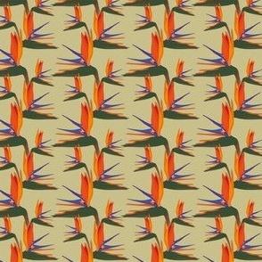 Strelitzia Bird Flower