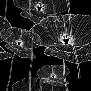 Black and white poppy