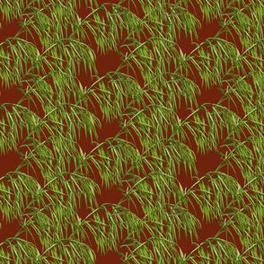 Broome Grass of Alberta