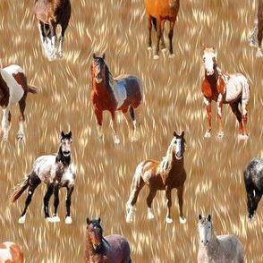 Horses on Fur Fields