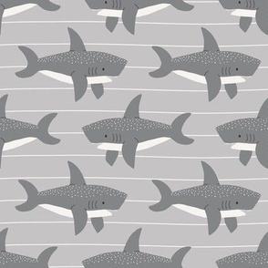 swimming sharks //  stone