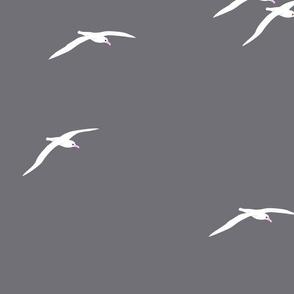 Albatross Rain 2021