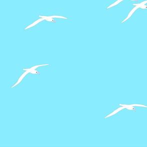 Albatross Sea Mist 2021