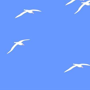 Albatross Sky 2021