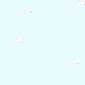 Albatross Summer Seafoam 2021