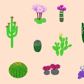 Cactus Garden 2021