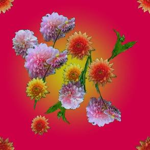 Rose dahlia's -great  8