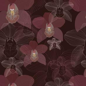 Chocolate Cymbidium orchid