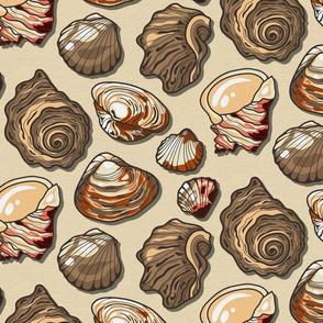 Black Sea Natural Color Seashell / Medium Scale