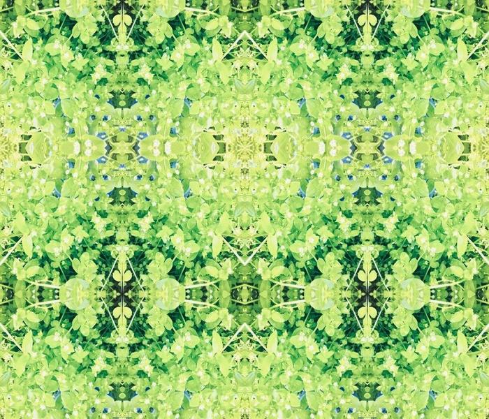 Chickweed kaleidoscope