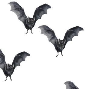 Vampire Bats - Natural