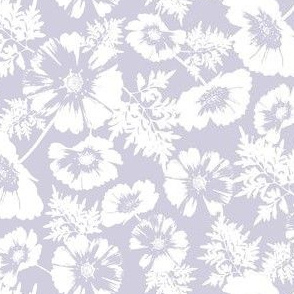 White Cosmos Flower on Purple