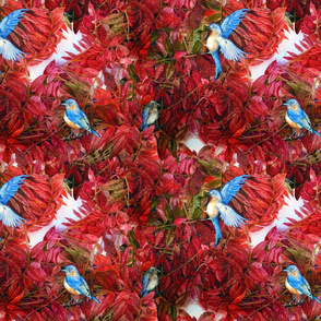 Bluebirds Love Sumac
