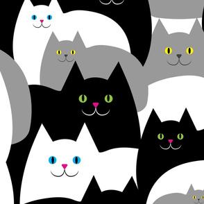 Fat Cats Watching You