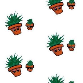 Happy Cactus Pot Plants