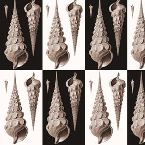 Cornucopia Seashells Art Deco