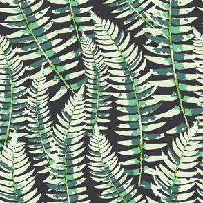 Evening Ferns