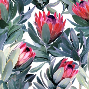 Painted Protea Pattern on White Background - extra large