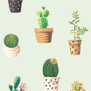 Cactus Frenzy
