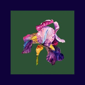 """8"""" x 8"""" watercolor iris for embroidery square PSMGE"""