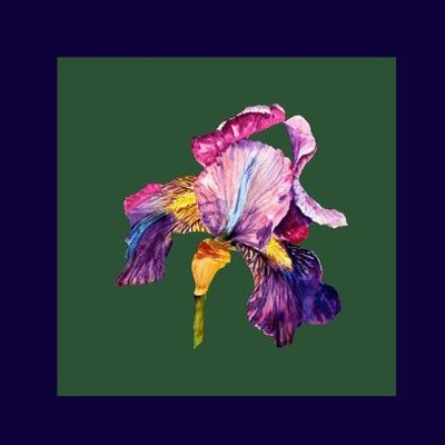 "8"" x 8"" watercolor iris for embroidery square PSMGE"