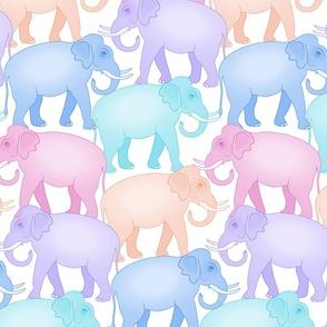 Indian Elephants on Parade