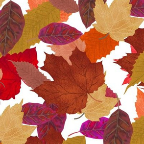 Autumn Leaf Pile on White