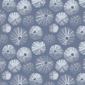 Sea Urchin (Rough Plaster)   Blue