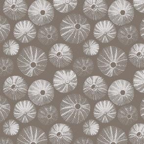 Sea Urchin (Rough Plaster)   Clay