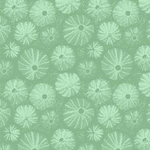 Rustic Sea Urchins   Seaweed