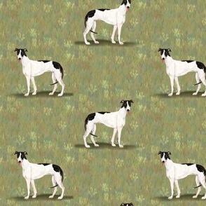 Custom Black and White Greyhound