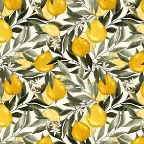 Le jardin botanique. Bergamot. Citrus Fruits
