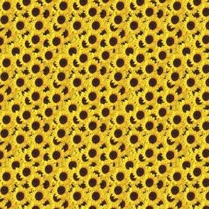 sunflowers - teeny