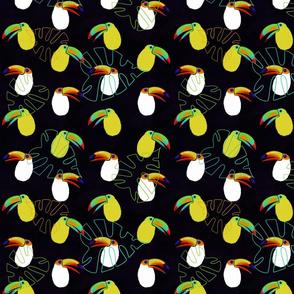 Toucans smaller