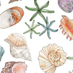 Shells Glorious Shells