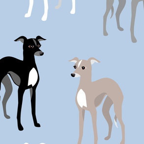 Whippets or Italian Greyhounds
