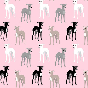 Whippets or Italian Greyhounds Pink