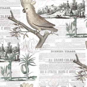 Cockatoo Vintage