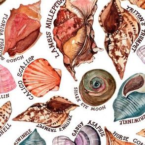 Seashore's seashells- large
